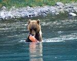 Blickfänge im Norden - Alaska & Yukon