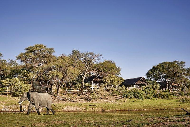 Belmond Savute Elephant Camp Tiere