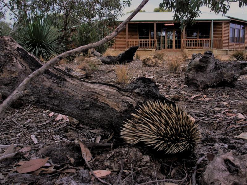 Kangaroo Island Wilderness Resort Tiere