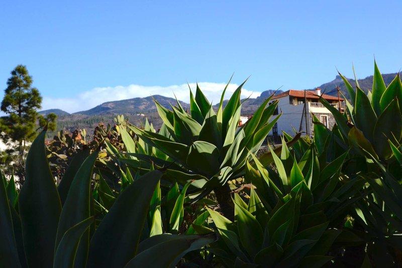 Finca Estanco Viejo - El Pino & El Poleo Landschaft